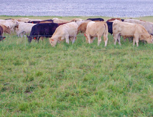 Cape John Community Pasture Intensive Grazing Project