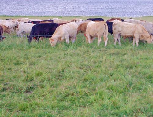 Cape John Community Pasture Intensive Grazing Project