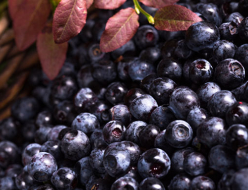 Glenmore Farms:  Adding Value to Wild Blueberries