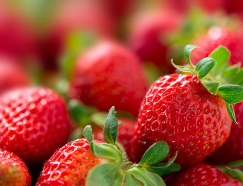 Strawberries: The effect of chill hour accumulation on growth and yield