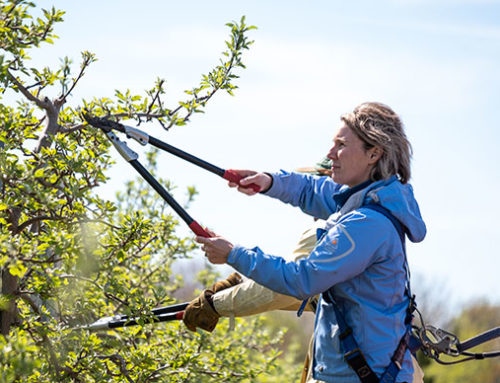 SPURR BROTHERS tackled replanting issues in orchards through Perennia